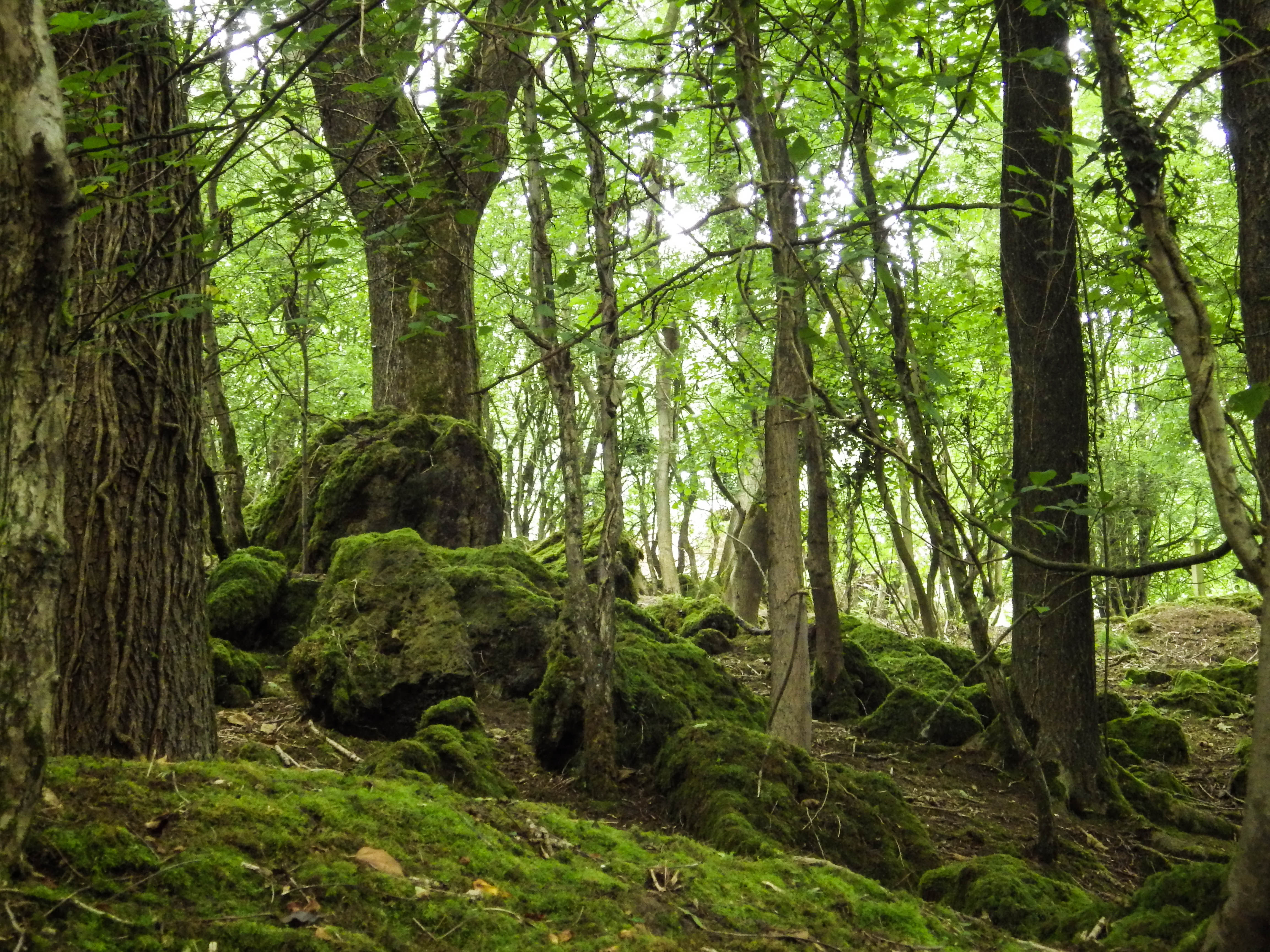 Moss covered boulders and trees